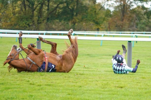 GBR: Fontwell Races