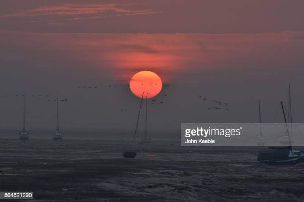 Brent Geese fly in to feed at sunrise in the Thames Estuary looking towards Southend on Sea on October 19 2017 in Leigh on Sea England Each year...
