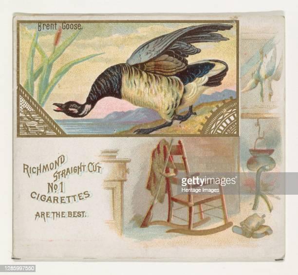 Brent Goose, from the Game Birds series for Allen & Ginter Cigarettes, 1888-90. Artist Allen & Ginter.