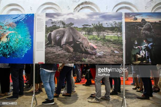 Brent Stirton 'Rhino Wars' photo on the opening of World Press Photo 2017 exhibition in the former Powerhouse of Royal Iron Works in Chorzow Poland...