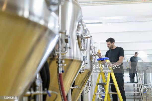 brewer inspecting sample of beer from tank in small brewery - brewery stock pictures, royalty-free photos & images