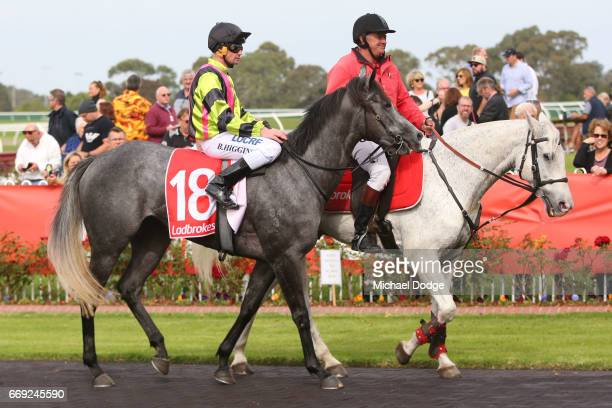 Brian Higgins after winning on Sneakers in the Elvis Ricky Thurgood Handicap at Ladbrokes Park Lakeside Racecourse on April 17 2017 in Springvale...
