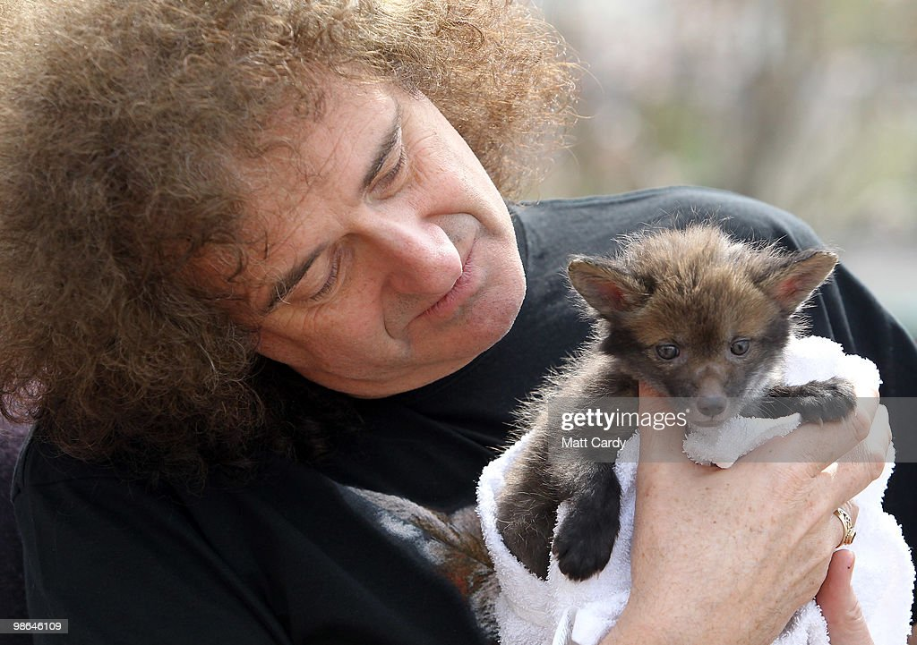 Brian May, founding member of the rock band Queen, holds a baby fox