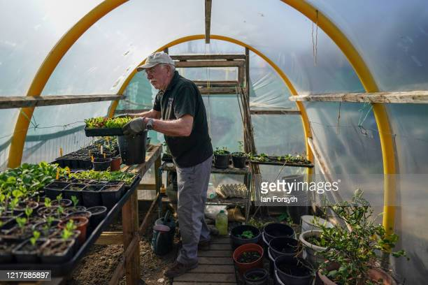 Brian Ridsdale inspects his seed trays as he tends to his allotment and follows government guidelines on social distancing and time restrictions on...