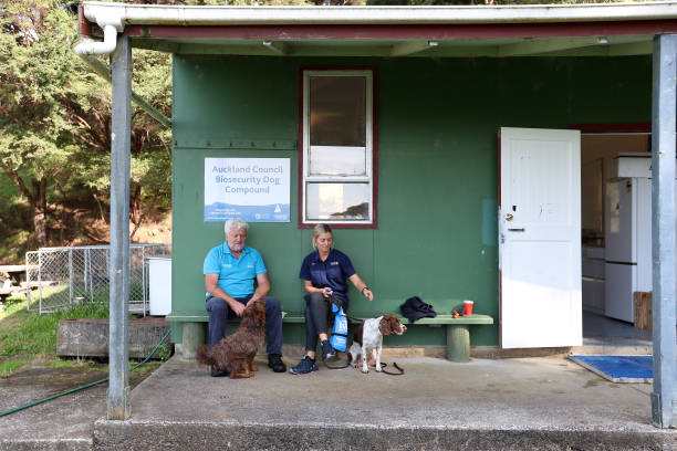 NZL: Sniffer Dogs Work To Help Detect And Prevent Kauri Dieback In New Zealand Forests