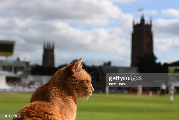 Brian the Cat looks on during Day Three of the Kia Women's Test Match between England Women and Australia Women at The Cooper Associates County...