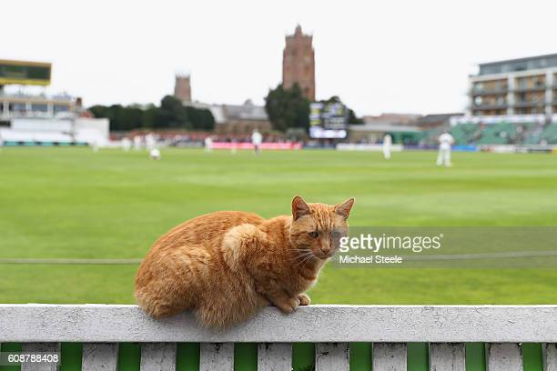 Brian the club cat takes a front row seat during day one of the Specsavers County Championship Division One match between Somerset and...