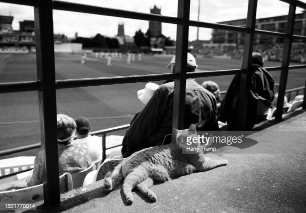 Brian the Somerset Cat watches play from the Lord Ian Botham Stand during Day Two of the LV= Insurance County Championship match between Somerset and...