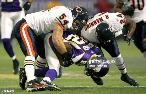 Brian Urlacher and Ricky Manning Jr #24 of the Chicago Bears team up to bring down Troy Williamson of the Minnesota Vikings September 24 2006 at the...
