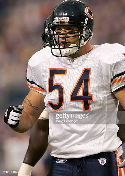 Brian Urlacher of the Chicago Bears stands on the field during the game with the Minnesota Vikings September on 24 2006 at the Metrodome in...