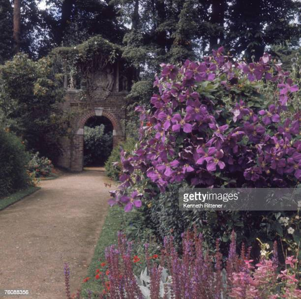 A brick archway and clematis in an old garden Britain August 1969
