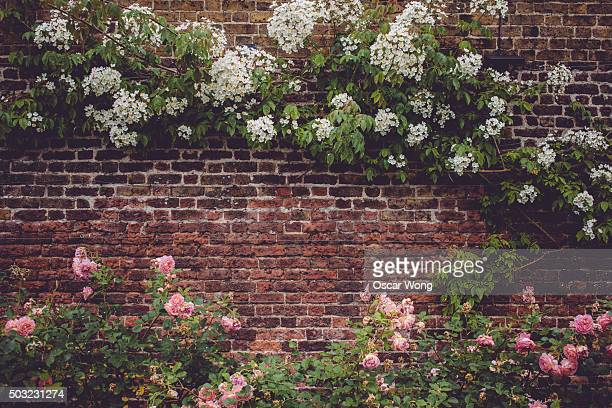 A brick wall full of flowers