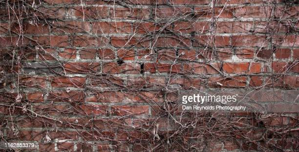 brick wall with vines - copy space - website template stock photos and pictures