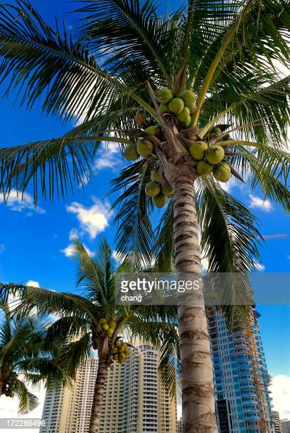 brickell key view and coconut palms