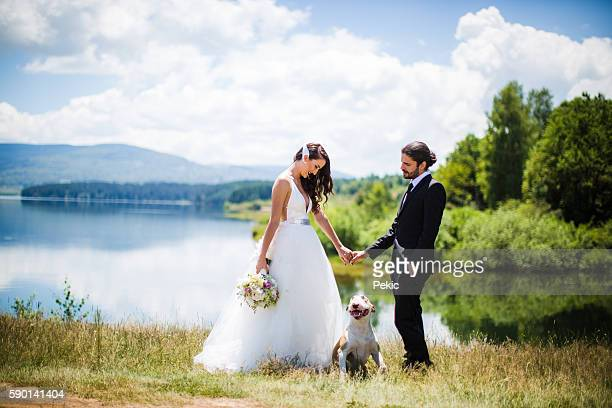 bride and groom wedding with dog - bull terrier stock photos and pictures