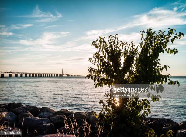 bridge above sea - regione dell'oresund foto e immagini stock