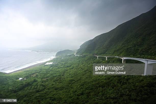 Bridge across an ocean of trees