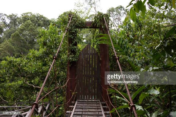 bridge across the maliau river, maliau basin, borneo, malaysia - argenberg stock pictures, royalty-free photos & images