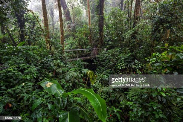 bridge along the encantado trail with thick vegetation in the cloud forest, reserva bosque nuboso santa elena, guanacaste province, costa rica - guanacaste stock pictures, royalty-free photos & images