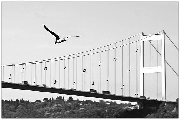 Bridge and seagull, Bosphorus, Istanbul, Turkey