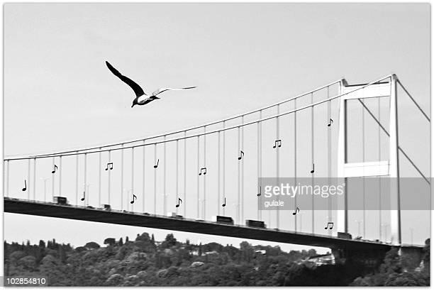 Bridge and seagull, Bosphorus, Istanbul, Turkey
