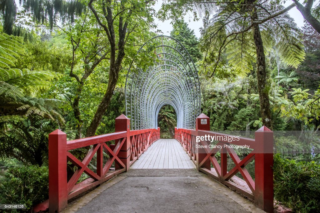 Bridge at Pukekura Park : Stock-Foto