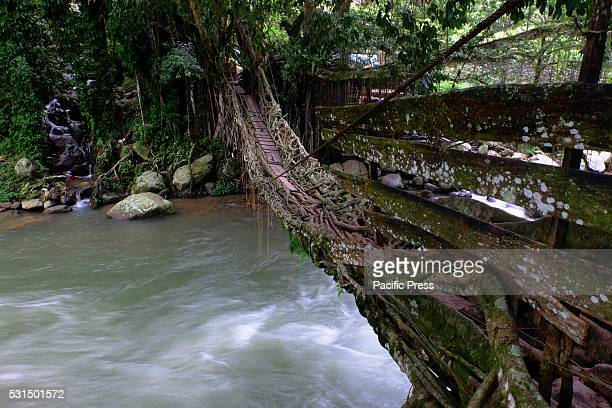 A bridge formed of two trees' interwoven roots which grow on opposite banks and extends over the Batang Bayang River in Pesisir Selatan Local...