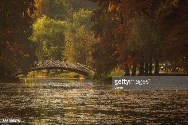 Bridge in a park over a lake in autumn season with coloufrul leafs