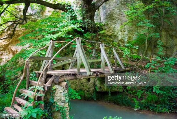 Bridge In Forest