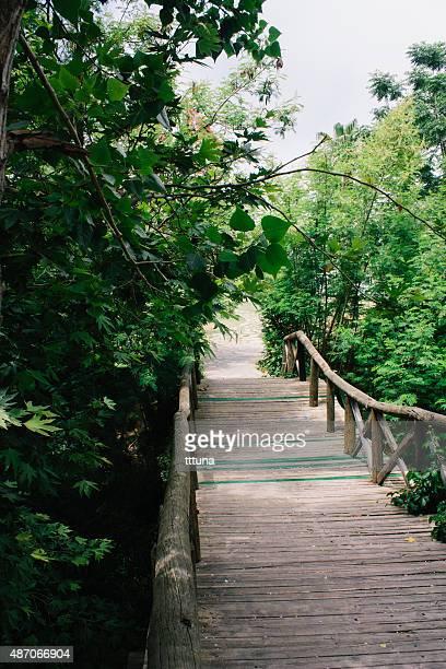 bridge in forest, tourism travel destination