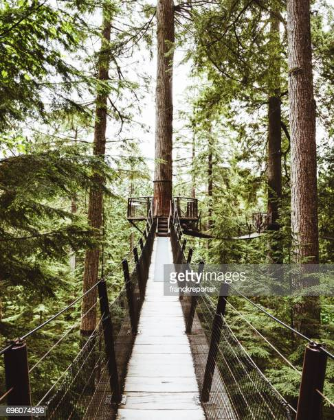 bridge in the forest in british columbia - vancouver canada stock pictures, royalty-free photos & images