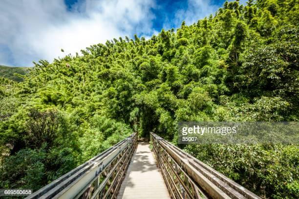竹林に橋します。