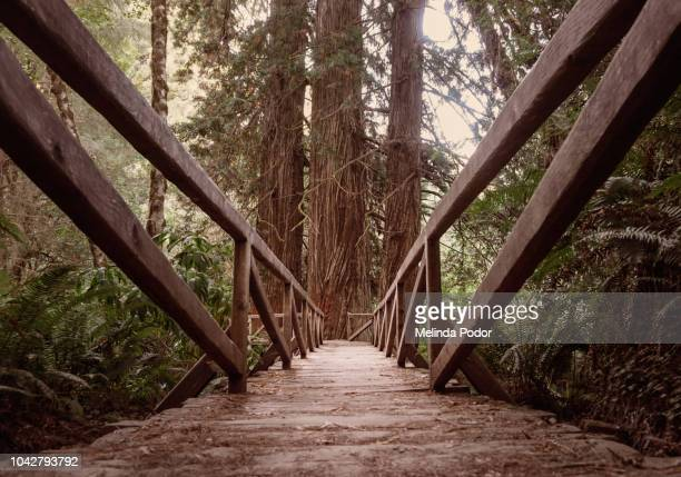 Bridge on a trail at Redwoods Park near Arcata, California
