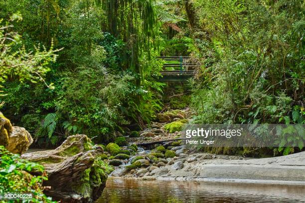 bridge on walking track at kahurangi national park at oparara basin, west coast, south island,new zealand - kahurangi national park bildbanksfoton och bilder