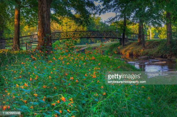 bridge over goose creek - missouri stock pictures, royalty-free photos & images