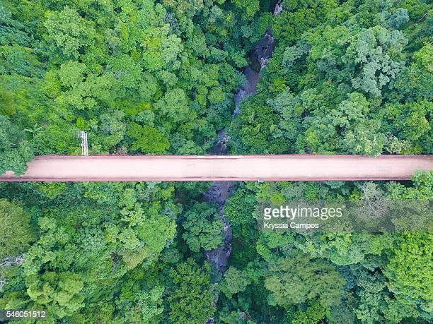 bridge over jungle, costa rica - footbridge stock photos and pictures
