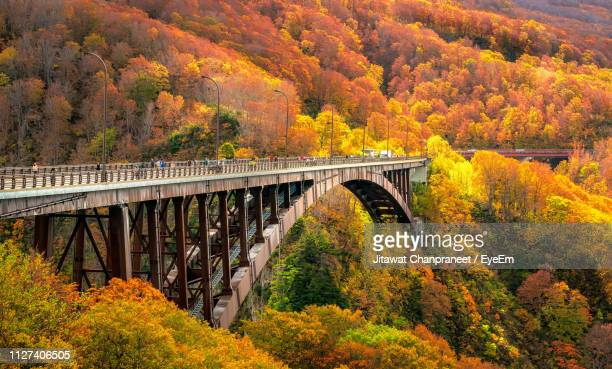 bridge over river in forest during autumn - aomori prefecture stock pictures, royalty-free photos & images