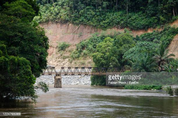 bridge over river in forest - gabon stock pictures, royalty-free photos & images