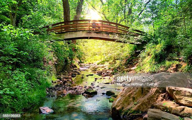 Bridge Over Stream Amidst Trees In Forest