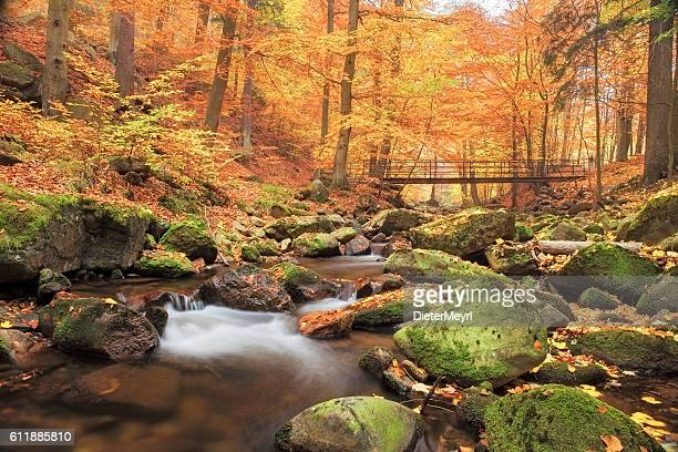Bridge over Stream in Forest at autumn - Nationalpark Harz