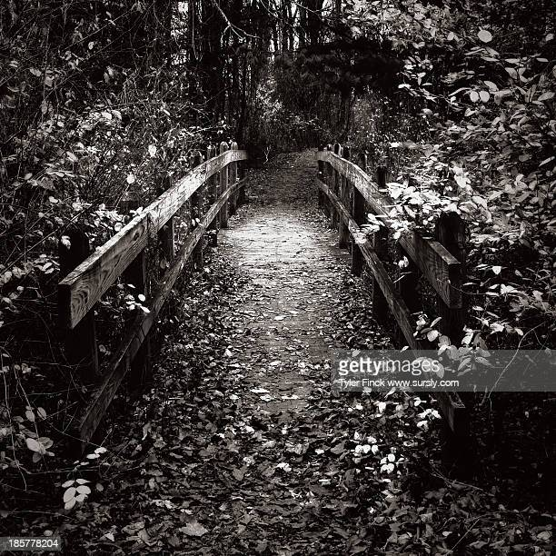 bridge through the forest - sursly stock pictures, royalty-free photos & images