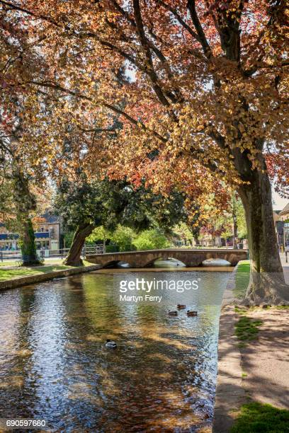 Bridge & trees at Bourton-on-the-Water, The Cotswolds, Gloucestershire, UK