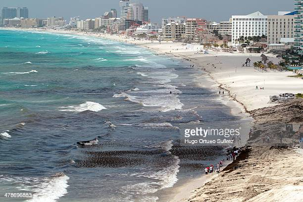Brigades continue cleanup work following tropical storm Ernesto 300 tons of red kelp were left on the beach after the storm made landfall Despite the...