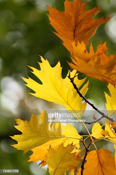 bright autumn colors - alyson fennell stock pictures, royalty-free photos & images