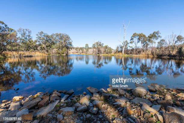 bright blue lake with trees reflecting in the water and lines of rocks in the foreground at sunrise - queensland imagens e fotografias de stock