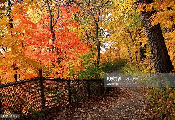 Bright Colored Path