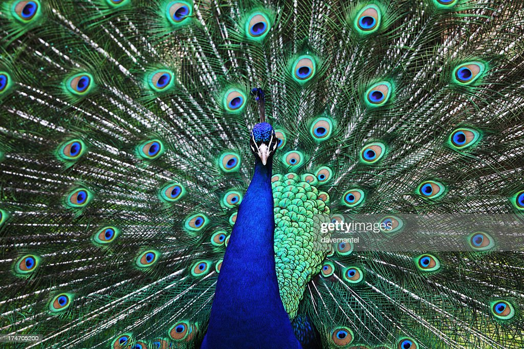 how to make peacock blue colour