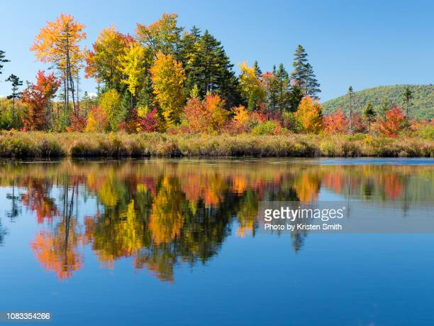bright fall foliage reflection with blue sky - september stock-fotos und bilder