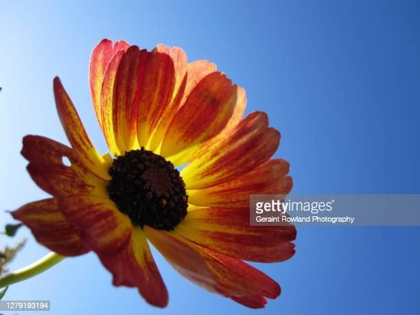 bright flower image - love magazine stock pictures, royalty-free photos & images