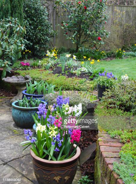 bright flowers in early spring domestic garden, england. - hyacinth stock pictures, royalty-free photos & images